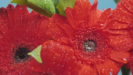 Beautiful wet flowers in a macro shot