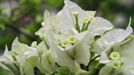 Beautiful white flowers in a garden