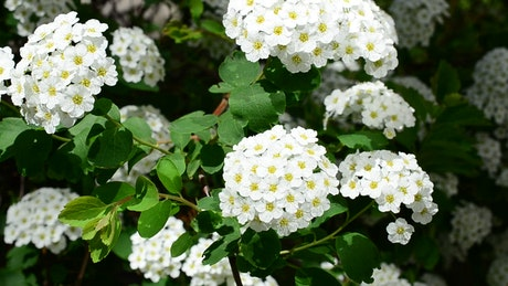 Beautiful white plants growing in the sun