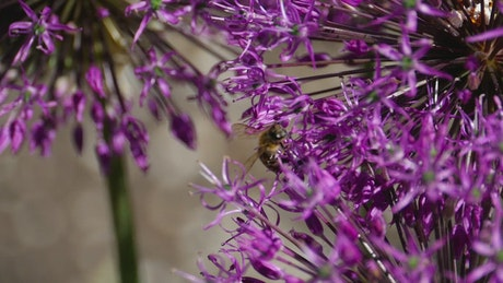 Bee flying in the flowers