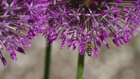 Bee flying with flowers