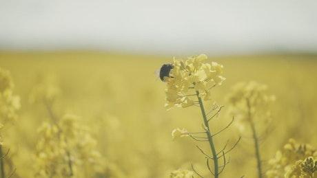 Bee landing on crops