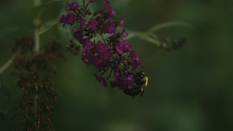 Bee pollinating the flowers in slow motion