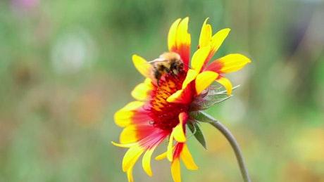 Bee walking on a flower