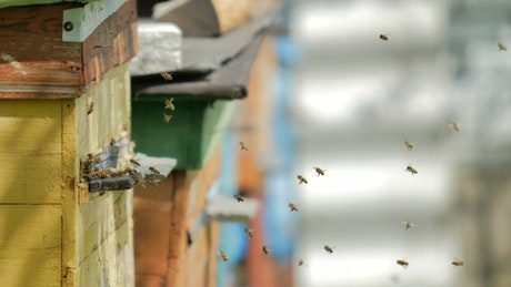 Bees flying on a poultry farm
