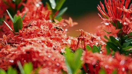 Bees landing on the same flower