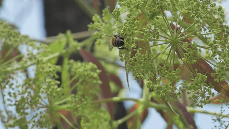 Bees on green and small flowers