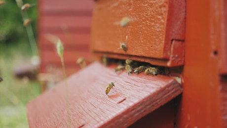 Bees producing honey in a beekeeping field