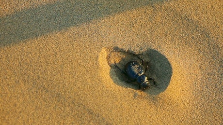 Beetle hiding in the sand