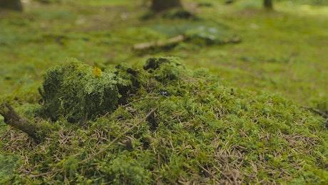Beetle walking over moss