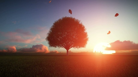 Big autumn tree at sunset, 3D animation