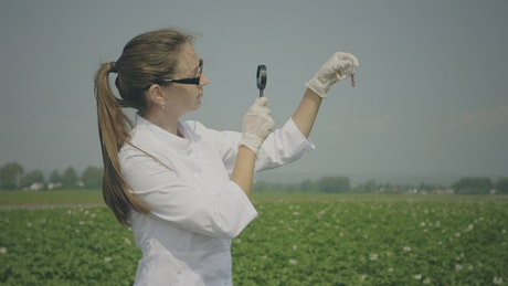 Biologist inspecting samples in the crop field