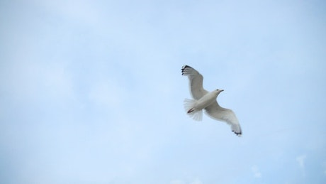 Bird experiencing freedom while flying