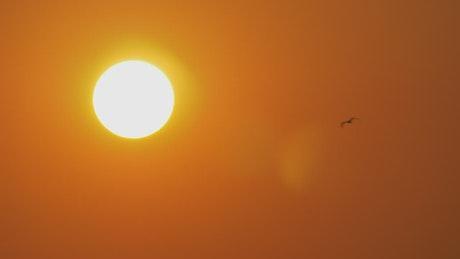 Bird flying by a golden sun
