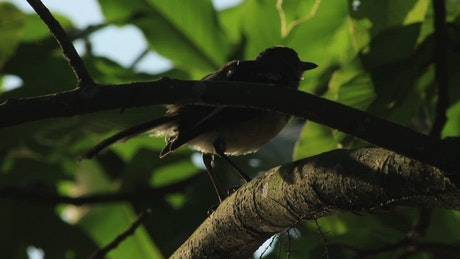 Bird in the shadow of a tree