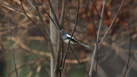 Bird looking around woodland