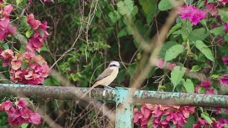 Bird on a metal fence