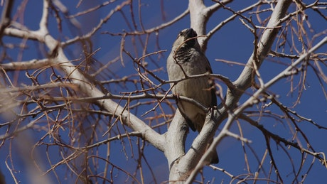 Bird perched on the branches of a dry tree