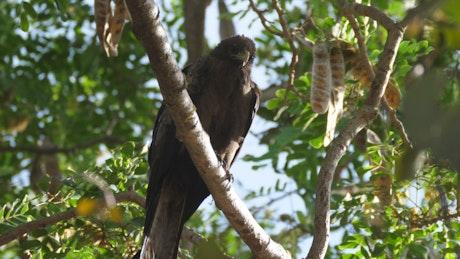 Bird resting in a tree