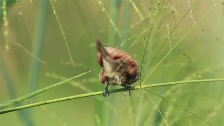 Bird sitting in tall grassland