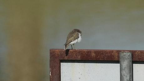 Bird sitting on a signpost