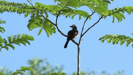 Bird swaying in the wind