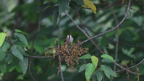 Bird taking insects from a branch