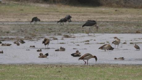 Birds enjoying the pond
