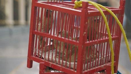 Birds for sale in Thailand