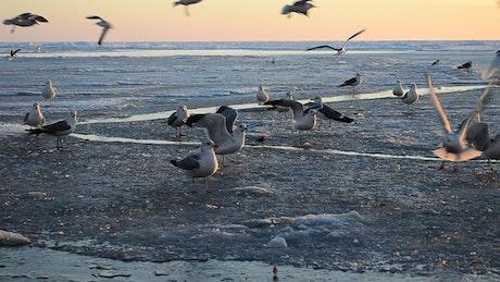 Birds foraging on the coast