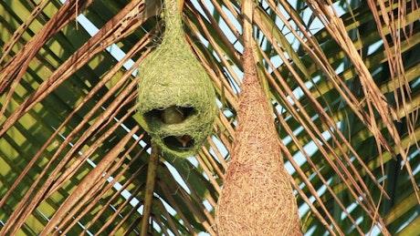 Birds inside a hanging nest