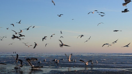 Birds landing on the beach