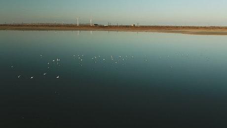 Birds lifting off from still water