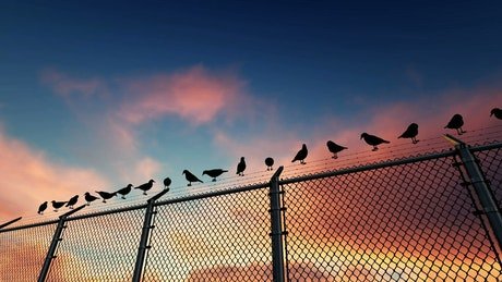 Birds on a wire fence