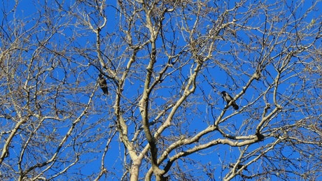 Birds perched on a dry tree on a sunny day