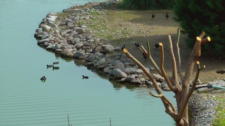 Birds, rocks and a dry tree around a lake