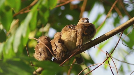 Birds sleeping in a group