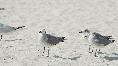 Birds standing on the beach sand