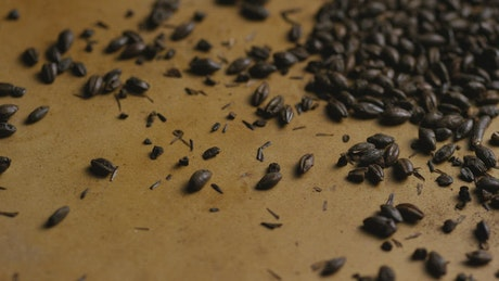 Black barley on a brown surface