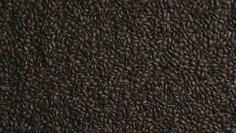 Black barley rotating