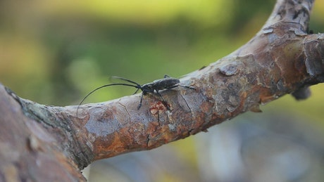 Black bug on a tree