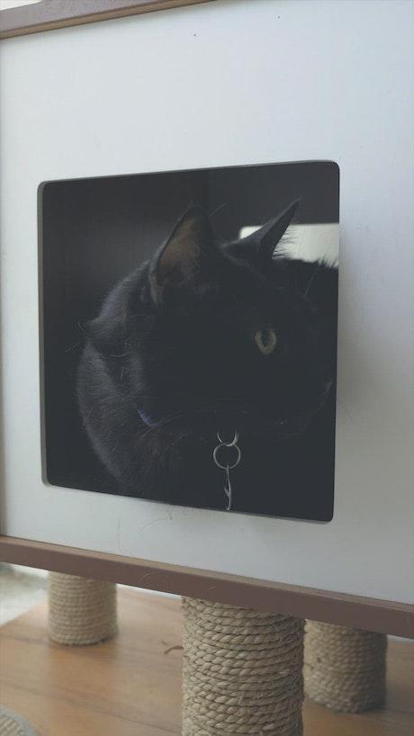 Black cat in a cat house