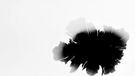 Black ink splattered