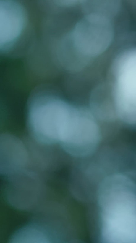 Blurred view of sky through the leaves of a tree