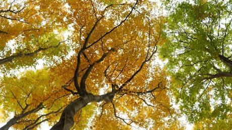 Bottom view of autumn trees