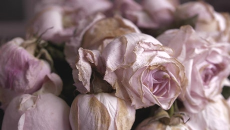 Bouquet of withered pink roses