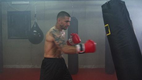 Boxer training hard