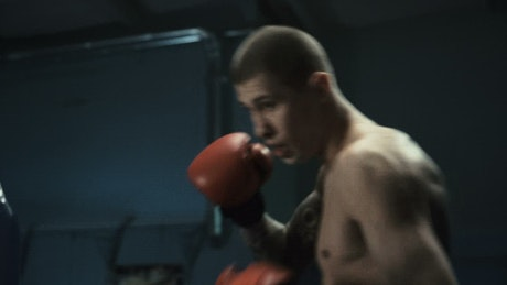 Boxer training hard at the gym