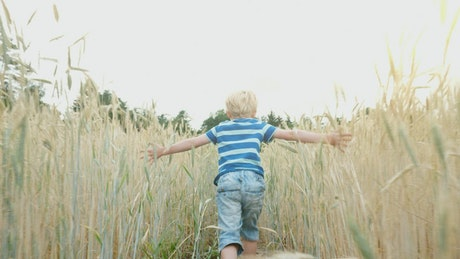 Boy running in a wheat field, tracking shot