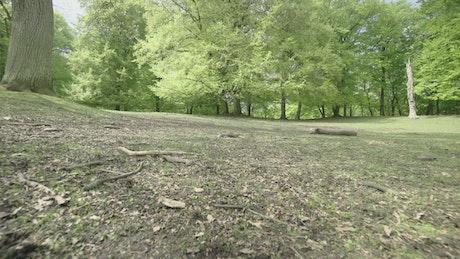 Boy running towards a forest